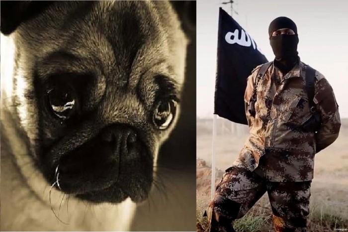 Kutyák tömeges mészárlására buzdít az ISIS legújabbfatwája